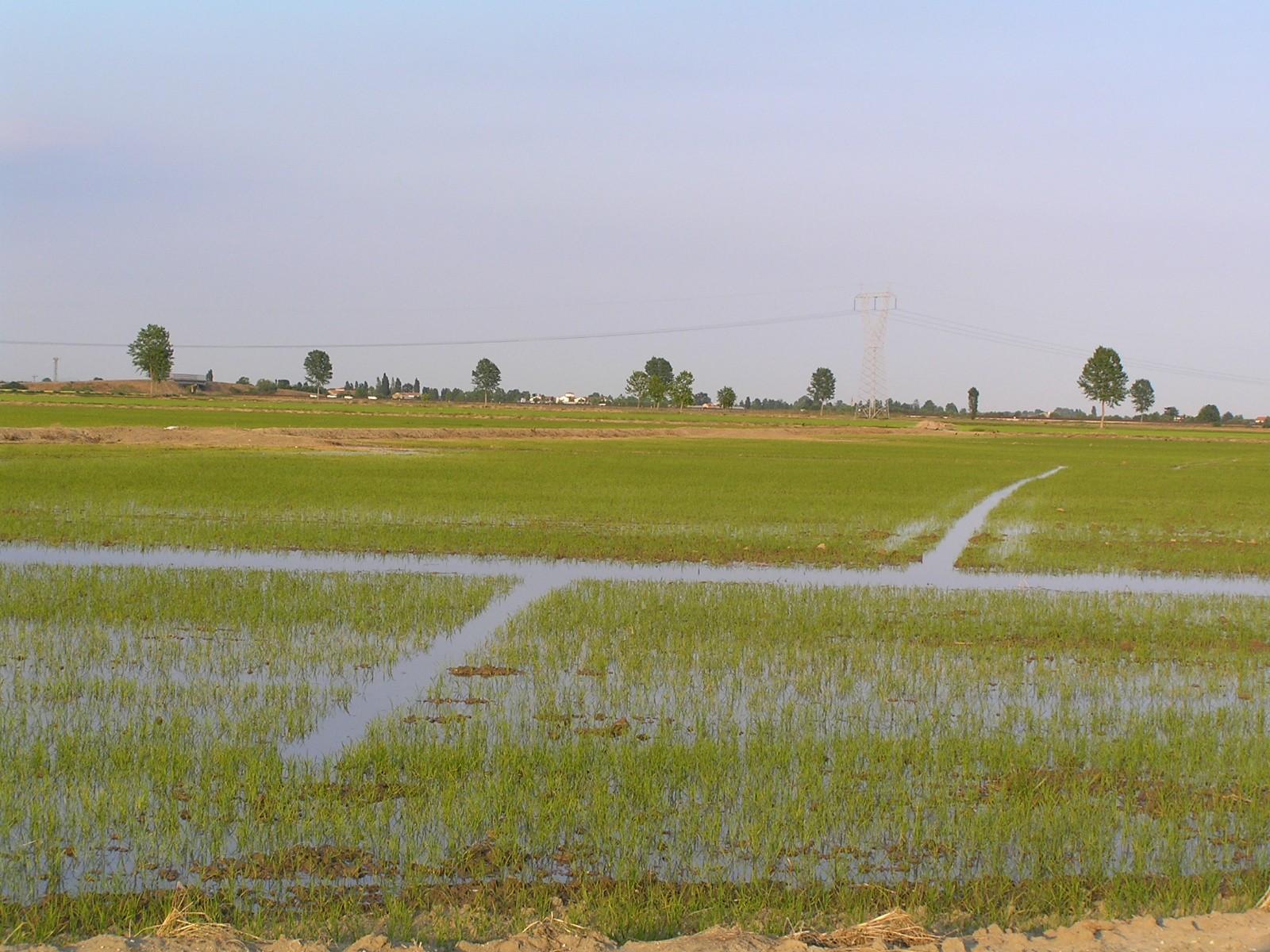 Agrometeo galleria immagini co di ma for Irrigazione per sommersione