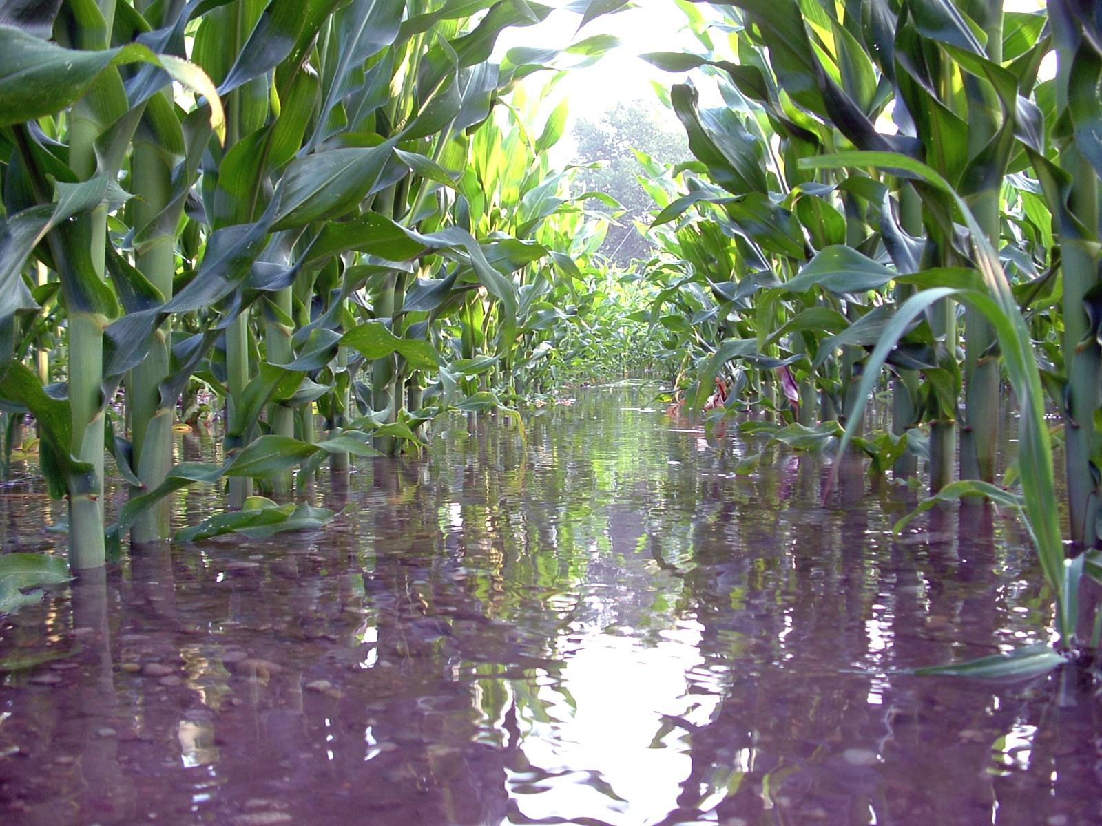 Portaleagricoltura tipi di irrigazioni del mais for Tipi di rubinetti dell acqua esterni